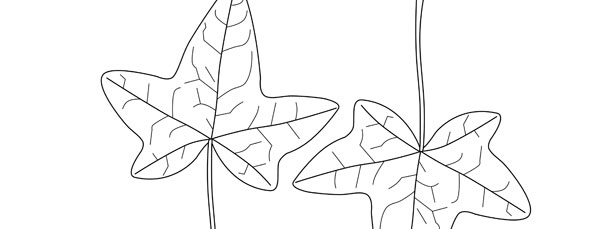 Ivy Leaf Template Medium
