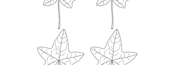 Ivy Leaf Template Small