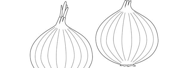 Onion Template – Medium