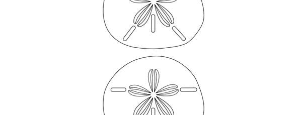 Sand Dollar Template Printable Picsbud